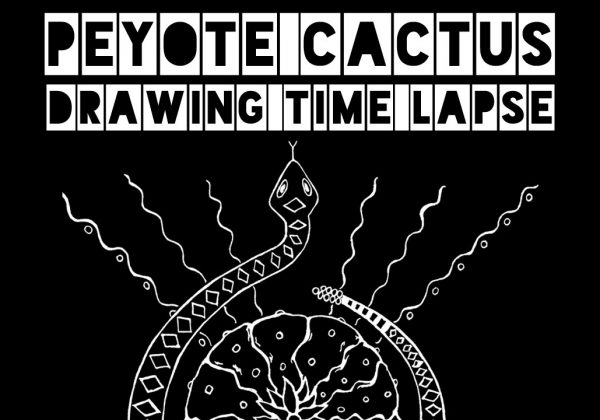 Peyote Cactus Drawing Time Lapse